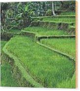 Terraced Fields Of Rice Wood Print