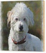 Terrier Dog Portrait Wood Print