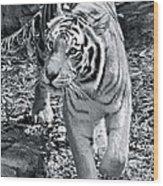 Terrific Tiger Wood Print