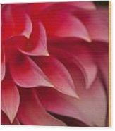 Testa Rossa Wood Print