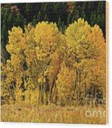 Teton Autumn Foliage Wood Print