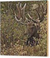 Teton Giant  Wood Print