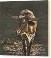 Texas Longhorn # 4 Wood Print