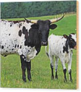 Texas Longhorn Cow And Calf Wood Print