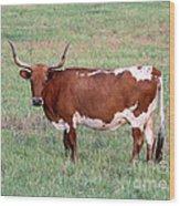 Texas Longhorn Wood Print