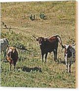 Texas Longhorns Panoramic Wood Print