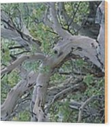 Texas Madrone Tree Limbs Wood Print