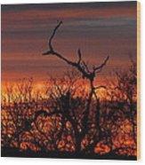 Texas Spanish Oak Tree  Sunset Wood Print by Rebecca Cearley