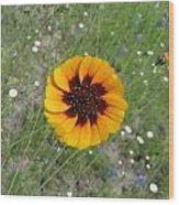 Texas Wildflower Wood Print