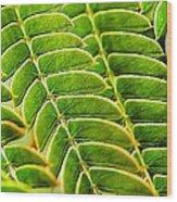 Textural Mimosa Wood Print