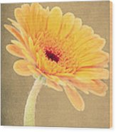Textured Gerbra Wood Print
