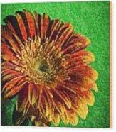 Textured Orange Flower Wood Print