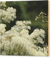 Thalictrum Aquilegiifolium Album Wood Print