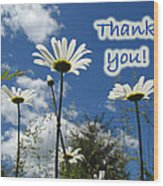 Thank You Greeting Card - Oxeye Daisy Wildflowers Wood Print