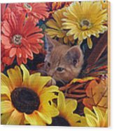 Thanksgiving Kitten Sitting In A Flower Basket Peeking Through Sunflowers