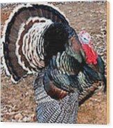 Thanksgiving Turkey Jitters Wood Print