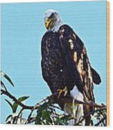 That Eagle Stare Wood Print