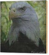 The American Bald Eagle - Lee Dos Santos Wood Print