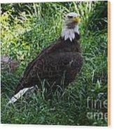 The American Bald Eagle IIi Wood Print