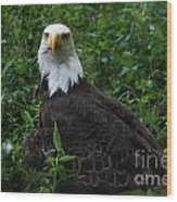 The American Bald Eagle Iv Wood Print