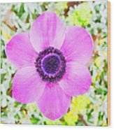 The Anemone Is So Pink Wood Print