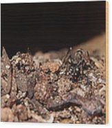 The Ant's Life Wood Print