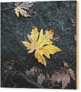 The Autumn Leaf Wood Print