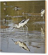 The Avocets  Wood Print