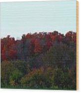 The Backyard Wood Print by Cyryn Fyrcyd