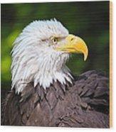The Bald Eagle Wood Print