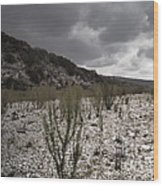 The Bank Of The Nueces River Wood Print