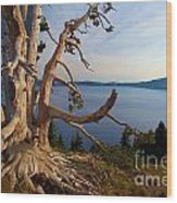 The Banks Of Crater Lake Wood Print