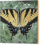 The Beauty Of A Butterfly Wood Print