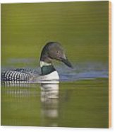 The Beauty Of A Common Loon Wood Print