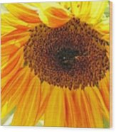 The Beauty Of A Sunflower Wood Print