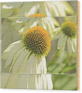 The Beauty Of The Coneflower Wood Print