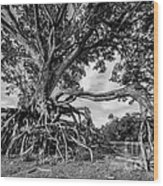 The Biggest Rain Tree In Thailand Wood Print
