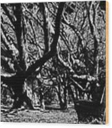 The Black Forest Wood Print
