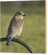 The Bluebird Of Happiness Wood Print
