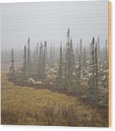 The Boreal Forest On A Foggy Day Wood Print