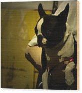 The Boston Bull Terrier  Wood Print