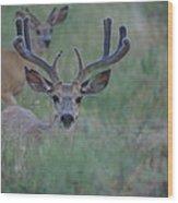 The Bucks Wood Print