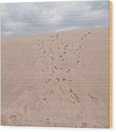 The Buffalo Dune Wood Print