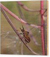The Bug With Fireweed Seeds Wood Print