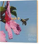 The Bumblebee And The Rose If Sharon Wood Print