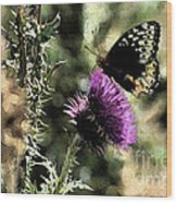 The Butterfly IIi Wood Print
