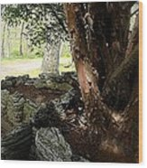 The Cedar Wood Print