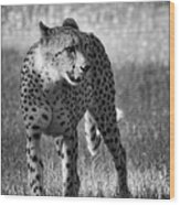 The Cheetah  Wood Print