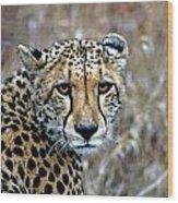 The Cheetah Stare Wood Print