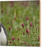 The Clover Field Wood Print